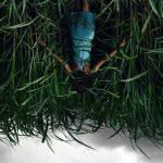 În iarba înaltă – In the Tall Grass