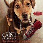 Drumul unui câine către casă – A Dog's Way Home